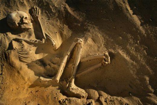 Nama Nama Fosil Manusia Purba Di Indonesia Goresan Anak Sma
